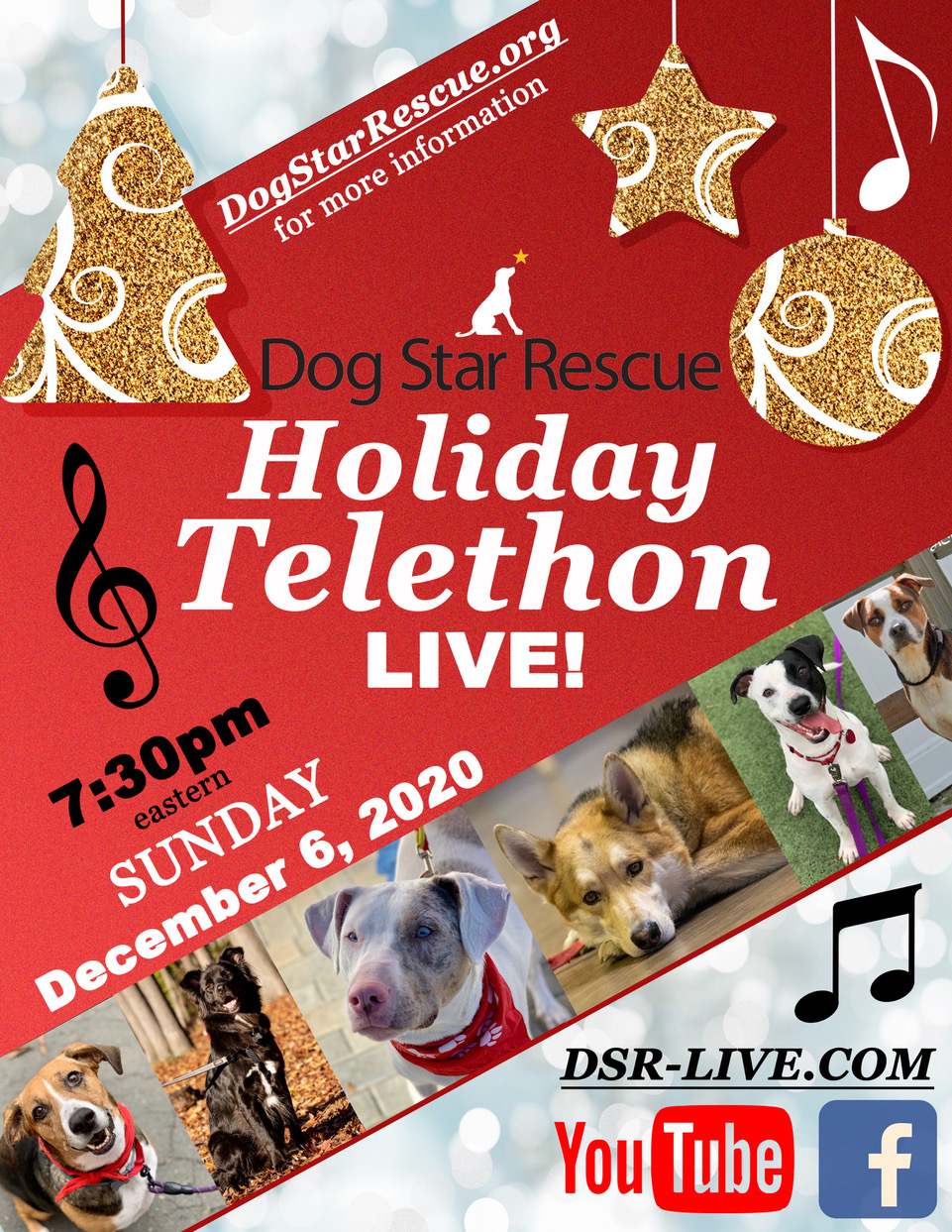 Ferry Law CT Telethon Dogstar